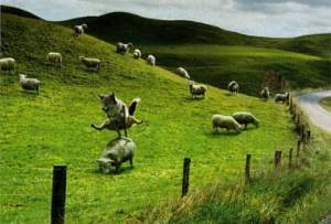 sheep_jumping